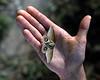 Holding a cold Pantanal moth.