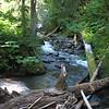 River & Log