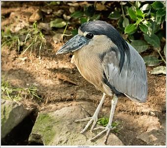 Some sort of shoebill stork?