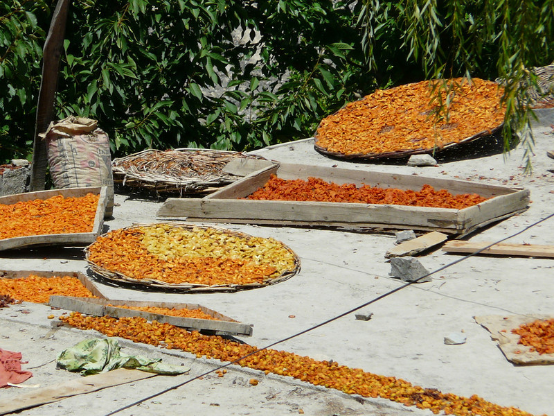 to dry apricots