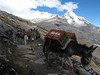 Transport with a donkey (Peru 2009, Cordillera Blanca)