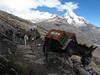 Transport with a donkey (Peru 2009, Cordillera Blanca)