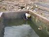 hot springs fills the swimmingpool (Peru 2009, Pacchanta 4300m. Nevado Ausangate)
