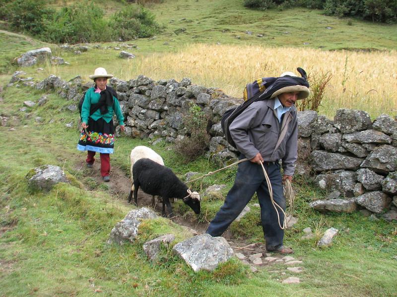 Goat transport (Peru 2009, Cordillera Blanca)