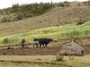 Plough (Peru 2009, Cordillera Blanca)