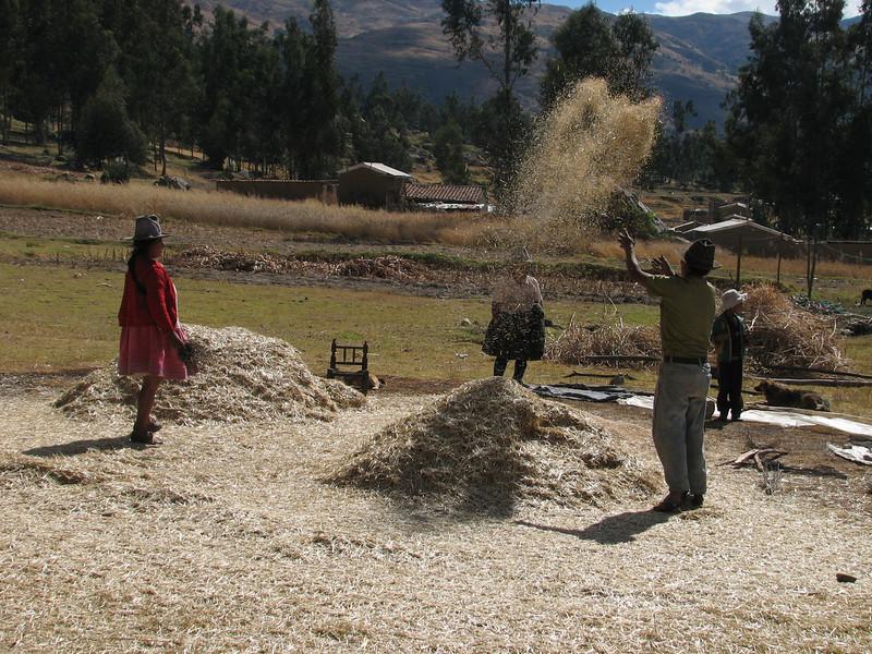 Harvesting the grain (Peru 2009, near Huaraz (3090m.))