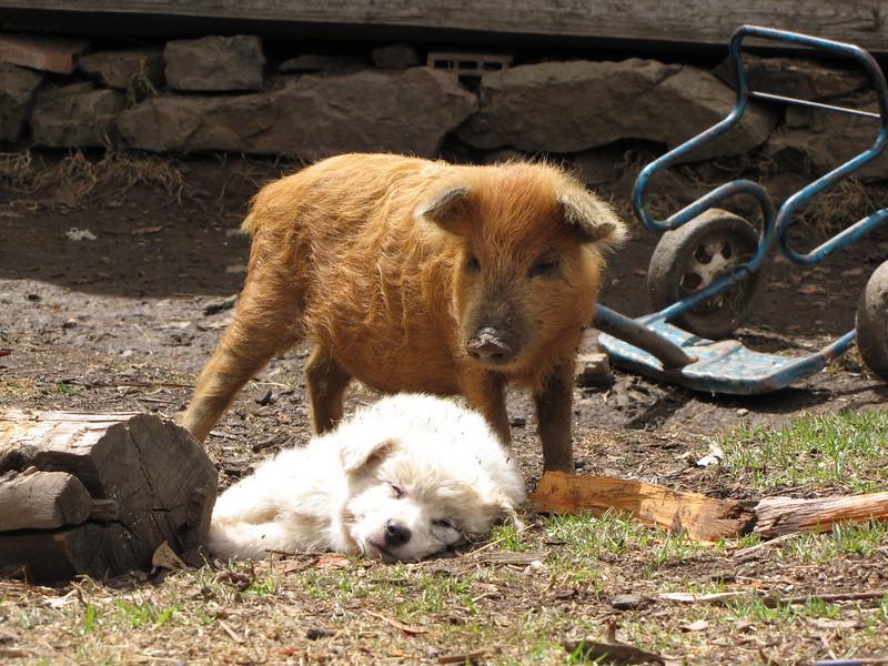 two friends (Peru 2009, Cordillera Blanca)