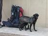 "Our dog ""Hoover"" (Peru 2009, Pomabamba 2950m, Cordillera Blanca)"