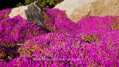 Color at Pinnacles National Park