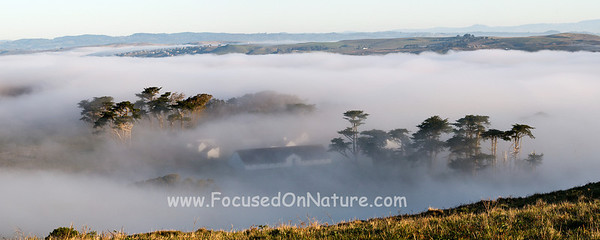 Pierce Point Ranch in Fog