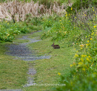 Bunny on the Trail