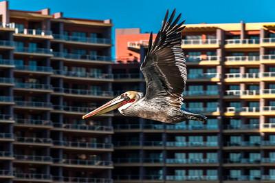 Pelican condo flyby