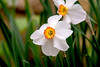 pelee - flower-0315