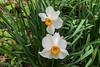pelee - Flowers-0763