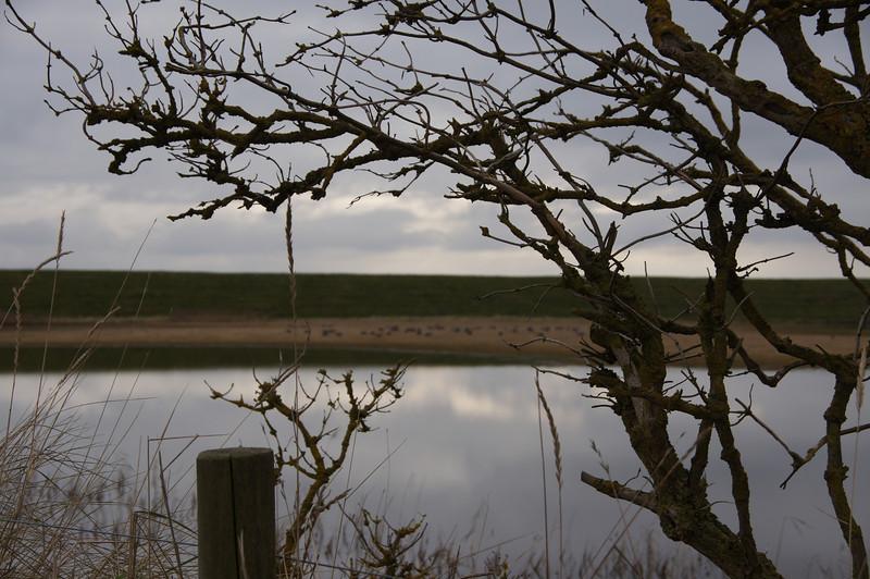 RSPB Frampton Marsh