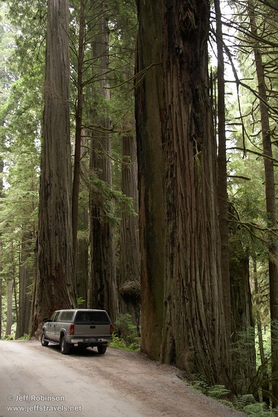 Truck by coastal Redwoods by Howland Hill Road through Jedediah Smith Redwoods Sate Park (6/30/2008, Redwoods trip)