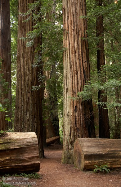 Trail lined by Coastal Redwoods (6/30/2008, Stout Grove loop trail, Jedediah Smith Redwoods SP, Redwoods trip)