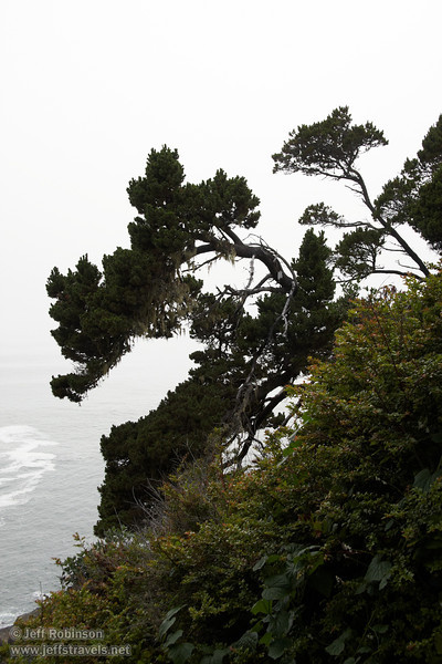 Twisted tree on coastline (7/2/2008, Rim Trail, Patrick's Point SP, Redwoods trip)