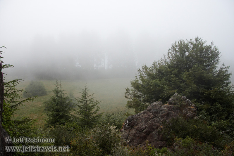 Foggy trees & meadow, seen from Ceremonial Rock (7/2/2008, Rim Trail, Patrick's Point SP, Redwoods trip)