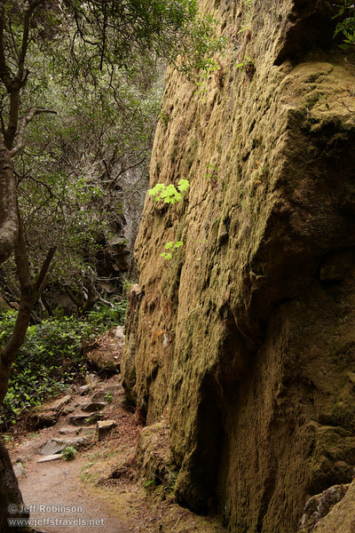 Backlit green plant on the cliff side of Ceremonial Rock (7/2/2008, Rim Trail, Patrick's Point SP, Redwoods trip)