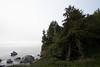 Coastal trees with rocks (7/2/2008, Rim Trail, Patrick's Point SP, Redwoods trip)
