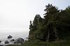 Coastal trees with rocks (7/2/2008, Rim Trail, Patrick's Point SP, Redwoods trip)