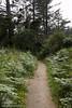 Flower & fern lined Rim Trail (7/2/2008, Rim Trail, Patrick's Point SP, Redwoods trip)
