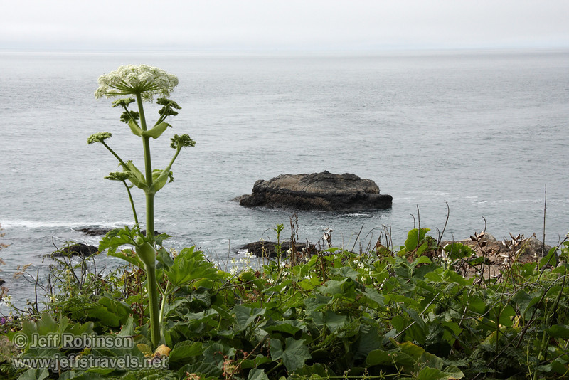 Rocks in the ocean near Mussel Rock with white flowers (Cow Parsnip) in foreground (7/2/2008, Rim Trail, Patrick's Point SP, Redwoods trip)