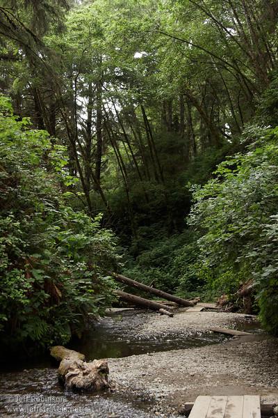 Fallen logs in Fern Canyon (7/1/2008, Fern Canyon,  Prairie Creek Redwoods SP, Redwoods trip)