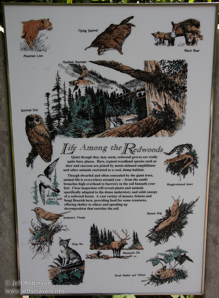 """Life Among The Redwoods"" sign (7/1/2008, Big Tree parking lot,  Prairie Creek Redwoods SP, Redwoods trip)"