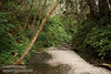 Entrance to Fern Canyon (7/1/2008, Fern Canyon trail,  Prairie Creek Redwoods SP, Redwoods trip)
