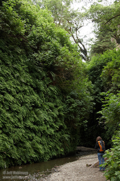 Lynda with camera by fern-covered wall in Fern Canyon (7/1/2008, Fern Canyon,  Prairie Creek Redwoods SP, Redwoods trip)
