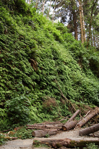 Fern Canyon (7/1/2008, Fern Canyon,  Prairie Creek Redwoods SP, Redwoods trip)