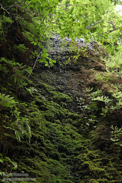 Water dripping off of moss-covered wall (7/1/2008, Fern Canyon,  Prairie Creek Redwoods SP, Redwoods trip)