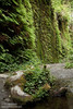 Fern-covered walls with dripping moss (7/1/2008, Fern Canyon,  Prairie Creek Redwoods SP, Redwoods trip)