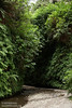 Stream running through the fern-covered walls of Fern Canyon (7/1/2008, Fern Canyon,  Prairie Creek Redwoods SP, Redwoods trip)