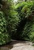 Stream running through the fern-covered walls of Fern Canyon (7/1/2008, Fern Canyon,  Prairie Creek Redwoods SP, Redwoods trip)