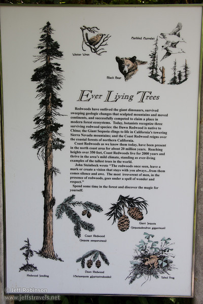 """Ever Living Trees"" sign (7/1/2008, Big Tree parking lot,  Prairie Creek Redwoods SP, Redwoods trip)"