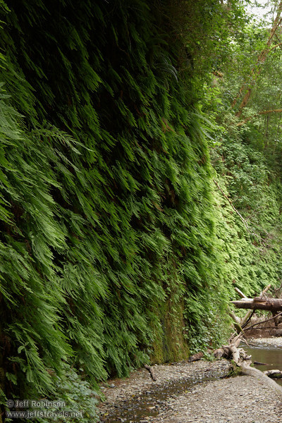 Fern-covered walls of Fern Canyon (7/1/2008, Fern Canyon,  Prairie Creek Redwoods SP, Redwoods trip)