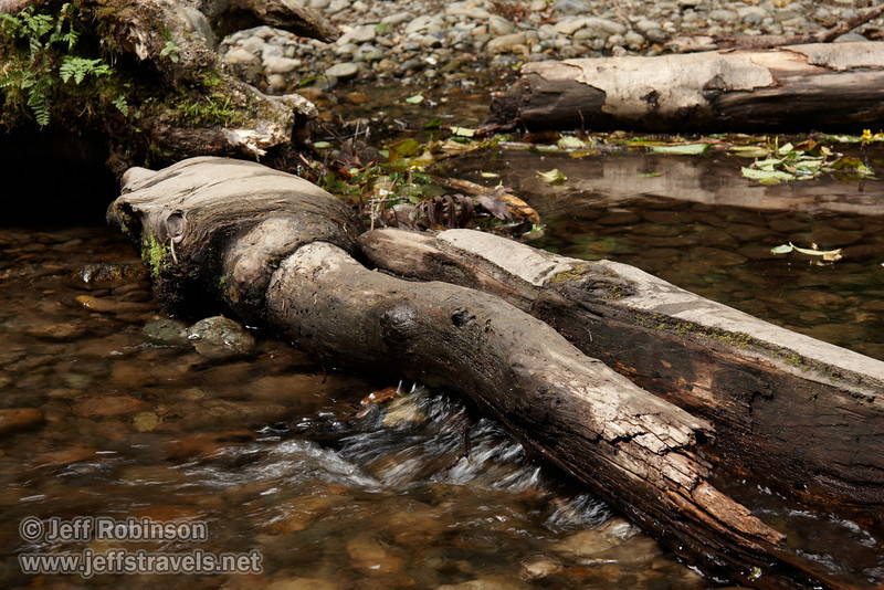 Water flowing under log (7/1/2008, Fern Canyon,  Prairie Creek Redwoods SP, Redwoods trip)