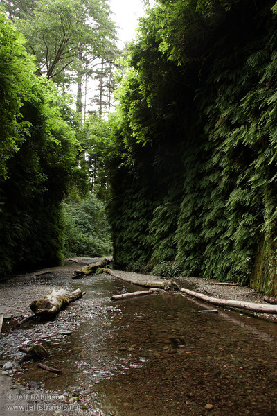 Stream flowing through fern-covered walls of Fern Canyon (7/1/2008, Fern Canyon,  Prairie Creek Redwoods SP, Redwoods trip)