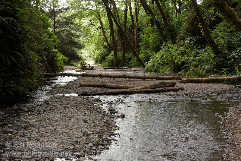 Downstream view of the entrance to Fern Canyon (7/1/2008, Fern Canyon,  Prairie Creek Redwoods SP, Redwoods trip)