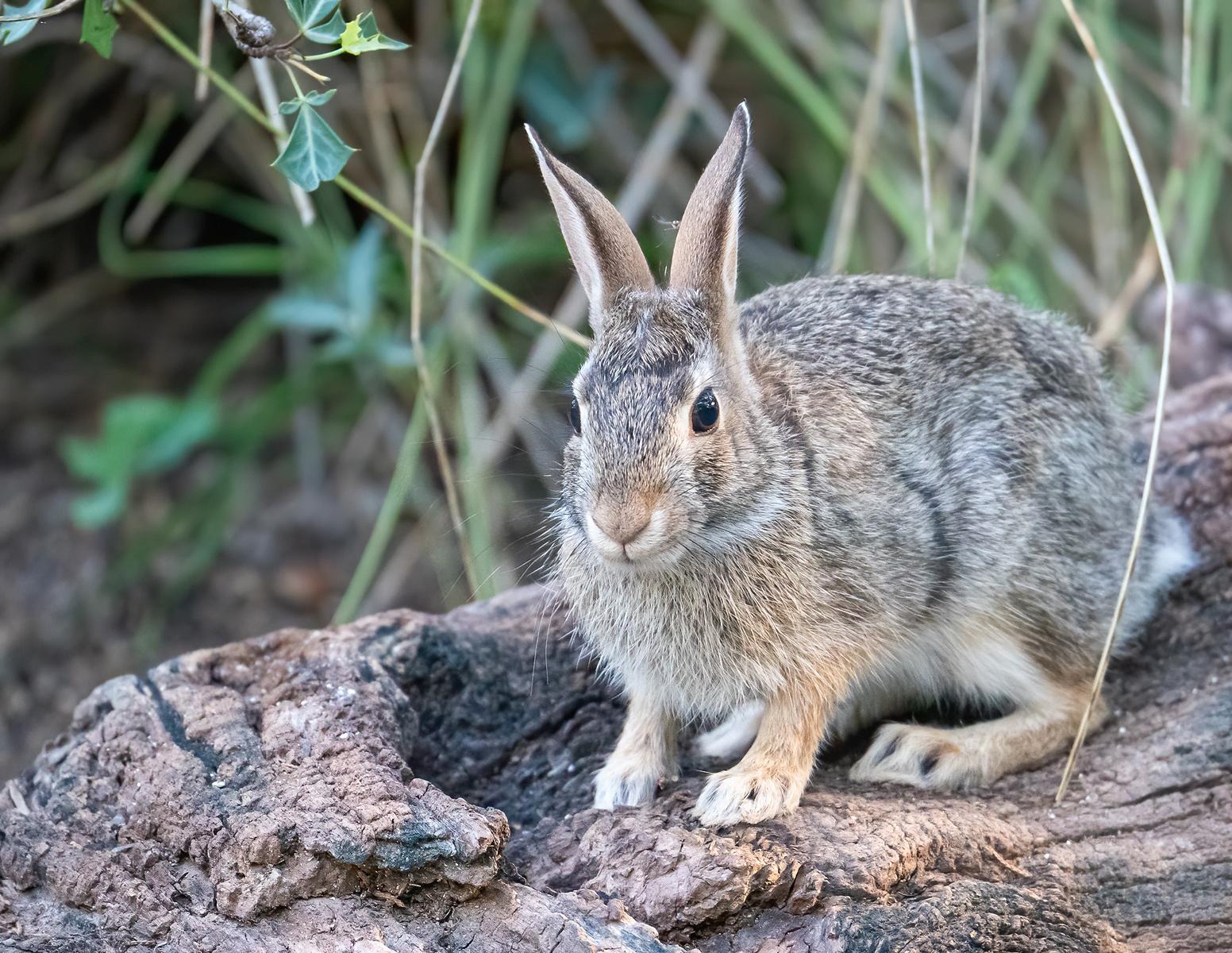 IMAGE: https://photos.smugmug.com/Trips/S-Llano-River-State-Park-June-2021/i-ZVFFpWc/0/cf8ef025/X3/Animals_9_6-2021-13-X3.jpg
