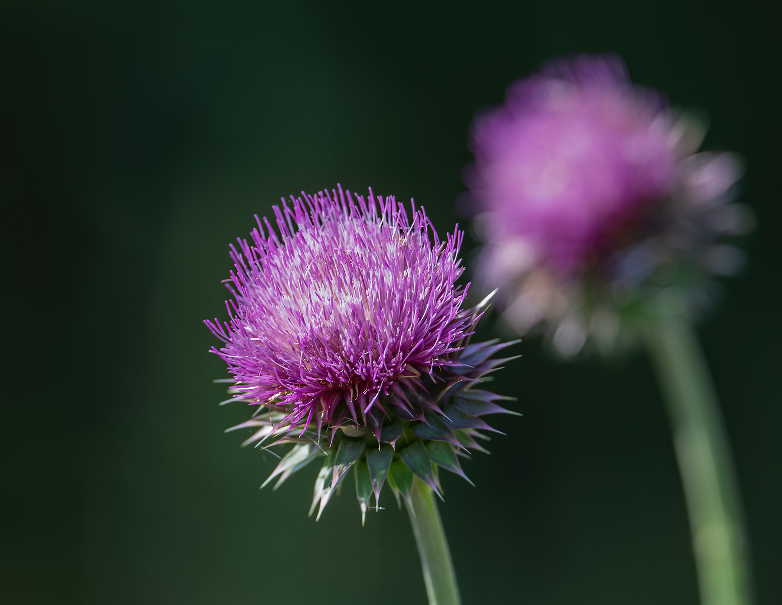 IMAGE: https://photos.smugmug.com/Trips/S-Llano-River-State-Park-June-2021/i-cWWXbTf/0/ef515f39/X3/Flowers_9_6-2021-6-X3.jpg