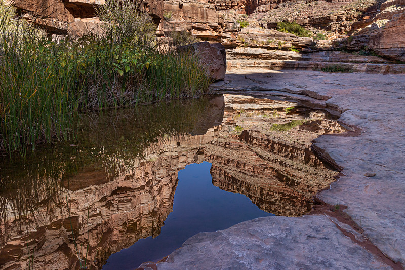 Tinaja Reflecting the Canyon walls in Slickhorn Wash