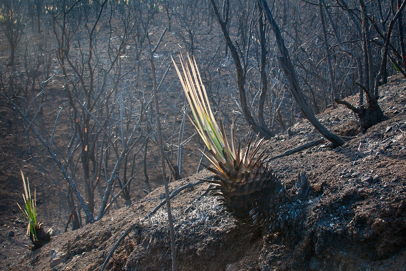 Yucca - Springs Fire