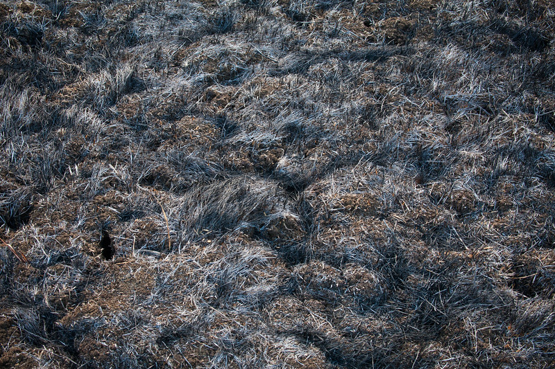 Burnt Grass - Springs Fire