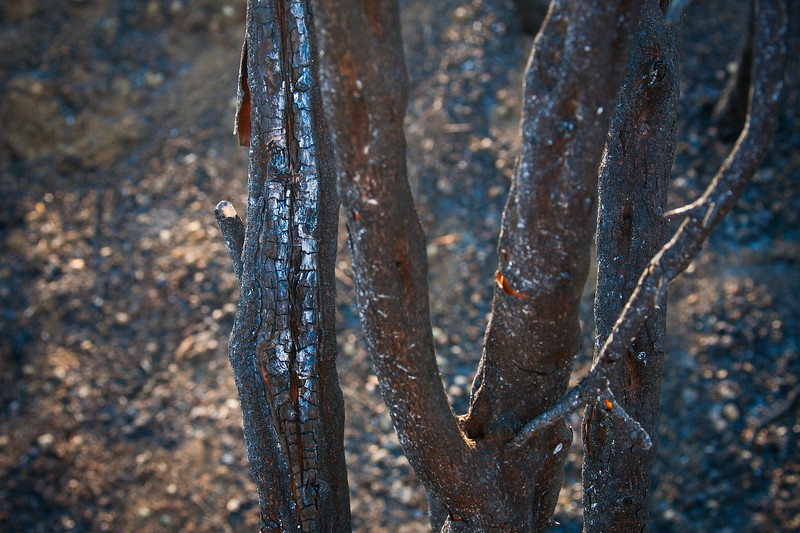 Charred Tree Branch - Springs Fire