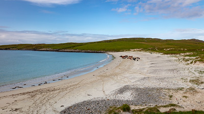 Bovine beach, Vatersay, Outer Hebrides
