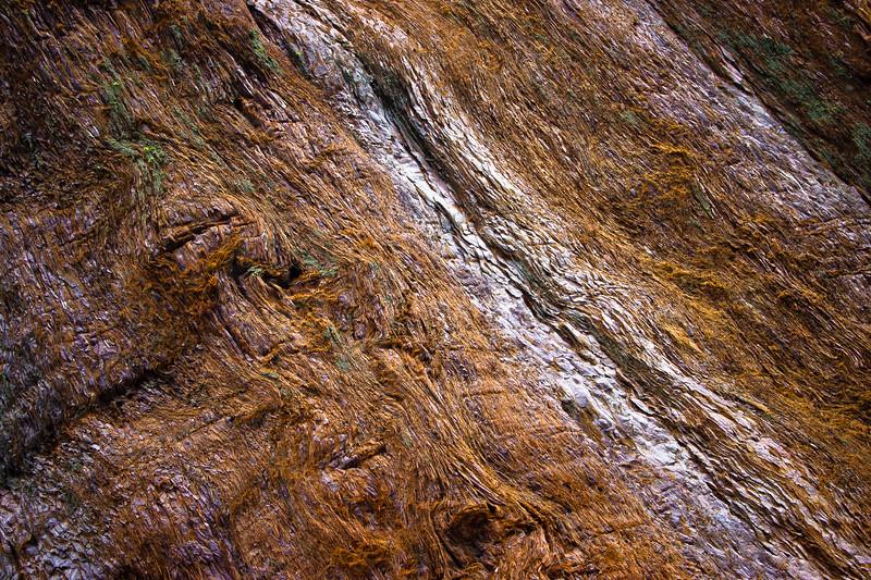 Sequoia Tree Trunk Detail
